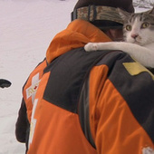 The secret lives of avalanche rescue cats | Pet News | Scoop.it