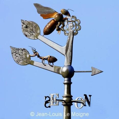 Les abeilles s'orientent grâce à une carte mentale, comme les humains - Atlantico.fr   Abeilles, intoxications et informations   Scoop.it