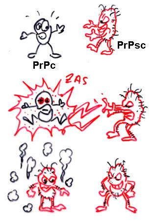 microBIO: Los priones siguen siendo un problema: el tejido linfoide es más eficaz para transmitir los priones de una especie a otra | microBIO | Scoop.it