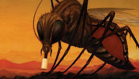 Une bactérie pour lutter contre la dengue | Biologie 2.0 | Scoop.it