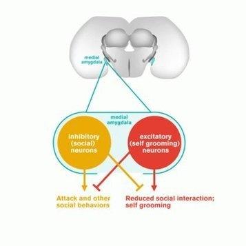 Tipping the Balance of Behavior | Social Neuroscience Advances | Scoop.it