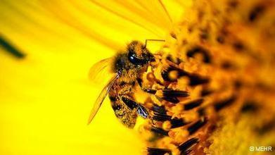 Bees buzz down Britain's highway for insects | Environment | DW.DE | 24.04.2014 | World Environment Nature News | Scoop.it