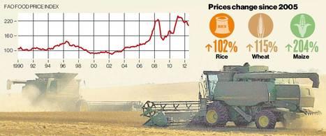 Goldman bankers get rich betting on food prices as millions starve | Questions de développement ... | Scoop.it