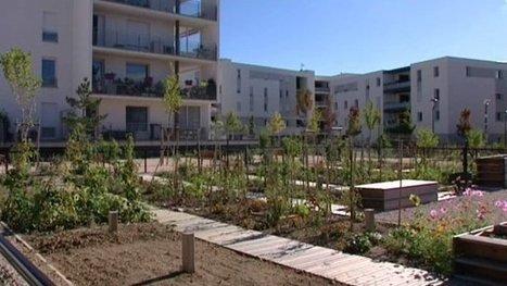 Le boom des jardins en ville (feuilleton) – société - France 3 Midi-Pyrénées | Bio, écologie et commerce équitable | Scoop.it