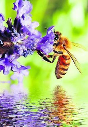 Micropolis, la cité des insectes : Rendez-vous à Saint-Léons le 22 juin  pour la journée de l'abeille | L'info tourisme en Aveyron | Scoop.it