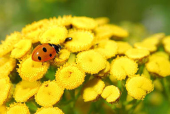 Temperate Climate Permaculture: Plants for Beneficial Insects | 100 Acre Wood | Scoop.it