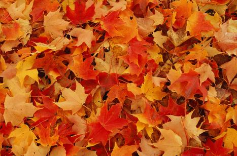 Capsule verte : Des idées pour les feuilles mortes   Les colocs du jardin   Scoop.it