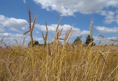 Face au changement climatique, les semences paysannes sont l'avenir de l'agriculture | Environnement et développement durable, mode de vie soutenable | Scoop.it