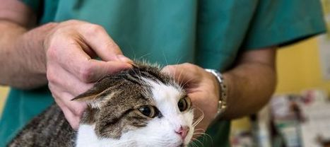 Comment nettoyer une tache d'urine de chat ? | CaniCatNews-vie-pratique | Scoop.it