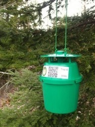 Group tracking spruce budworm | Nova Scotia Hunting | Scoop.it