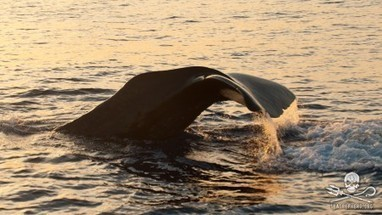 #SeaShepherd Conservation Society :: As the #Oceans #Choke on #Plastic so do the #Whales   Rescue our Ocean's & it's species from Man's Pollution!   Scoop.it
