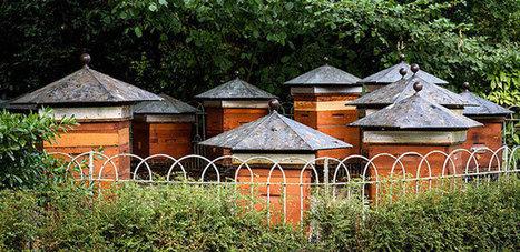 Paris, capitale des abeilles | Nous avons besoin des abeilles | Scoop.it