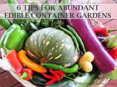 6 Tips for Abundant Edible Container Gardens | | Virtual & Sustainable Lifestyle | Scoop.it