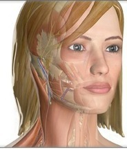 Great Tools To Teach about Human Body in 3D   ICT Resources for Teachers   Scoop.it