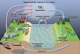 ciclo do carbono | Biologia diario | Scoop.it