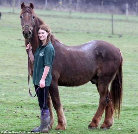World's oldest horse trots his final furlong. Irish draught Shayne, 51, put to sleep at Essex sanctuary. | Horse and Rider Awareness | Scoop.it
