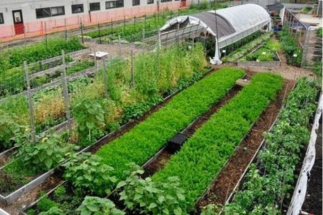 Urban farming is a hit with New York City college students - amNY | RSE | Scoop.it