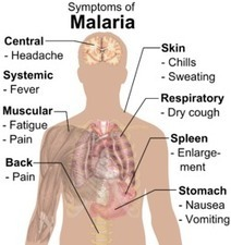 Some facts about malaria revealed | Health Care Tips | Scoop.it