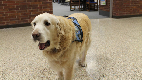 Therapy Dog's Retirement Honored in Indiana High School Yearbook - ABC News | Dog behavior | Scoop.it