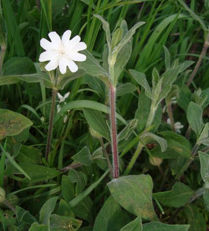 Les plantes vieillissent aussi...   Réseau Tela Botanica   Scoop.it