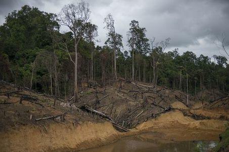 Mesurer la déforestation, un « travail complexe » | Enseigner l'Histoire-Géographie | Scoop.it