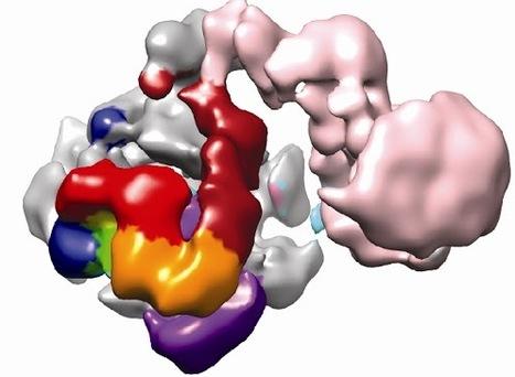 Reading the Human Genome | SynBioFromLeukipposInstitute | Scoop.it