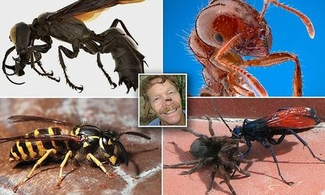 Researchers reveal the worst stings for insects in the world | CALS in the News | Scoop.it