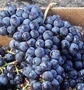 Old Grapevines Only In $10.99 | Harvest Express | Grapevines Only In $10.99. Buy Now | Scoop.it
