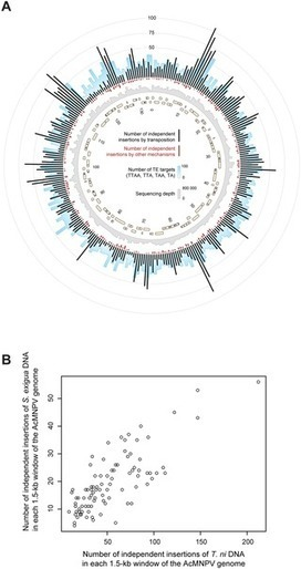 Continuous Influx of Genetic Material from Host to Virus Populations | Virology and Bioinformatics from Virology.ca | Scoop.it