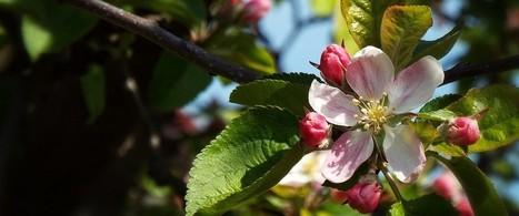 1.000 arbres fruitiers pour promouvoir la production locale | Le flux d'Infogreen.lu | Scoop.it
