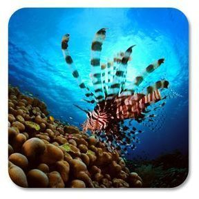 Underwater Photography & Video Portal | Coral Conservation | Scoop.it