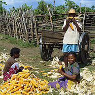 Innovative financing for agriculture, food security and nutrition - FSN Forum | Geoflorestas | Scoop.it