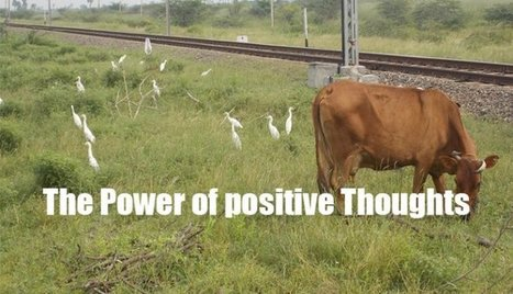 The Power of Positive Thoughts   Motivation for Entrepreneurs   Scoop.it