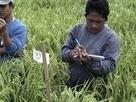 Faire avancer la cause des paysans, un engagement que le gouvernement se doit de respecter ! | Questions de développement ... | Scoop.it