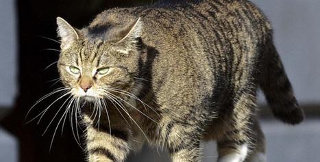 Al Chazeera | Les chats c'est pas que des connards | Scoop.it