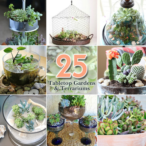 25 Ideas for Tabletop Gardens and Terrariums | Honest Opinions | Scoop.it