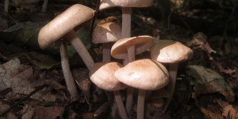 Géolocalisez et partagez vos coins à champignons | Attitude BIO | Scoop.it