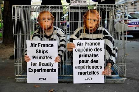Hélène de Fougerolles dénonce l'enfer des singes d'Air France - Néoplanète | Chronique d'un pays où il ne se passe rien... ou presque ! | Scoop.it