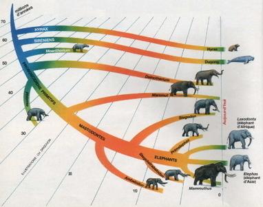 Sirtin » La dentition particulière des éléphants et des mammouths | C@fé des Sciences | Scoop.it