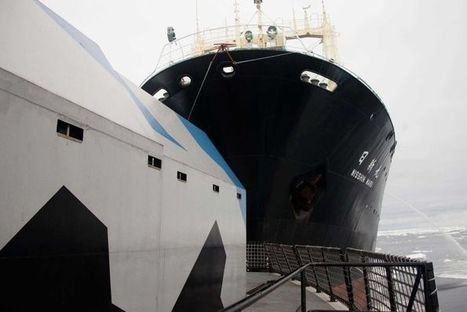 Japan halts whale hunt after Sea Shepherd clashes   Daily Crew   Scoop.it