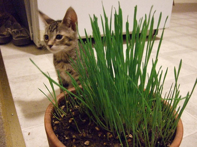 Cats Like Healthy Pet Salad | Feline Health and News - manhattancats.com | Scoop.it
