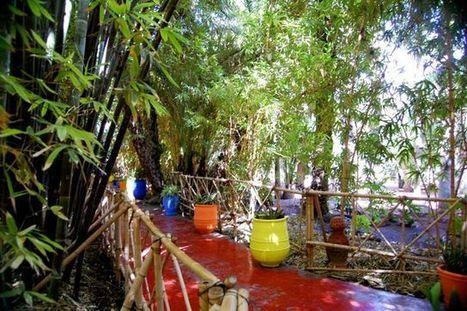 A blogger's impression on Yves Saint Laurent's Artist Garden in Marrakech - Jardin Majorelle | Arts & luxury in Marrakech | Scoop.it