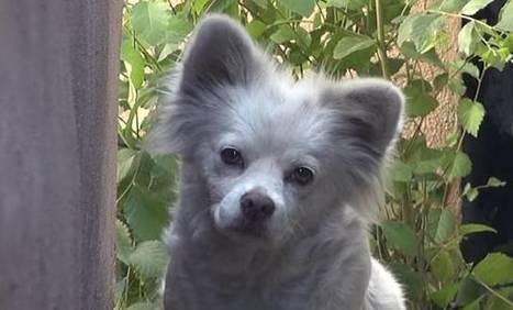Le superbe sauvetage d'un chien, abandonné par sa famille qui a déménagé sans lui... | CaniCatNews-actualité | Scoop.it