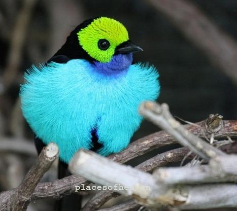 Top Ten Most Beautiful Birds in the World | Viva Technics | Biology 1 | Scoop.it