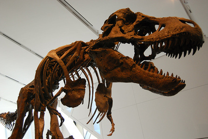 Most Dinosaur Bones Discovered are Radioactive | TruthTheory | Interesting science | Scoop.it