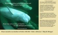 Wild Belugas Need Your Help: Champions for Cetaceans DailyScoop | Dolphins | Scoop.it