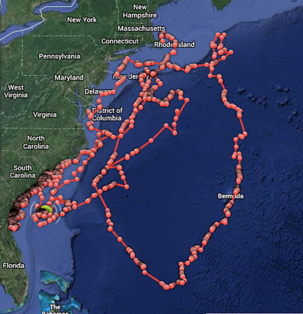 Researchers tag and track great white sharks and demonstrate that they spend a lot of time close to the beach | Amazing Science | Scoop.it