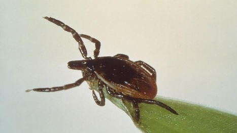 Winter is coming, but you're not out of the woods as far as tick diseases are concerned | Tick Borne Diseases in Canada (including Lyme, Bartonella, Babesiosis, Anaplasmosis, etc.) | Scoop.it
