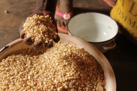 Health Lessons from International Cuisines: Africa - Chris Kresser | on reflection | Scoop.it