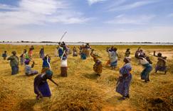 La Côte d'Ivoire et Louis Dreyfus signent pour des terres mais quid des paysans ? | Questions de développement ... | Scoop.it